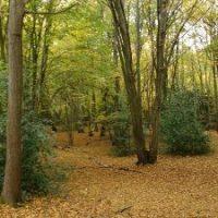 Copse Wood